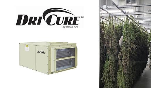 Desert Aire DriCure units dehumidify cannabis drying rooms