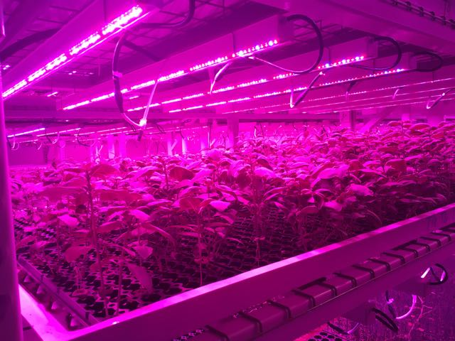 Desert Aire case study Green Sense Farms Grow Room