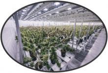 Grow Room Air Distribution