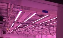 Indoor Grow Room lighting